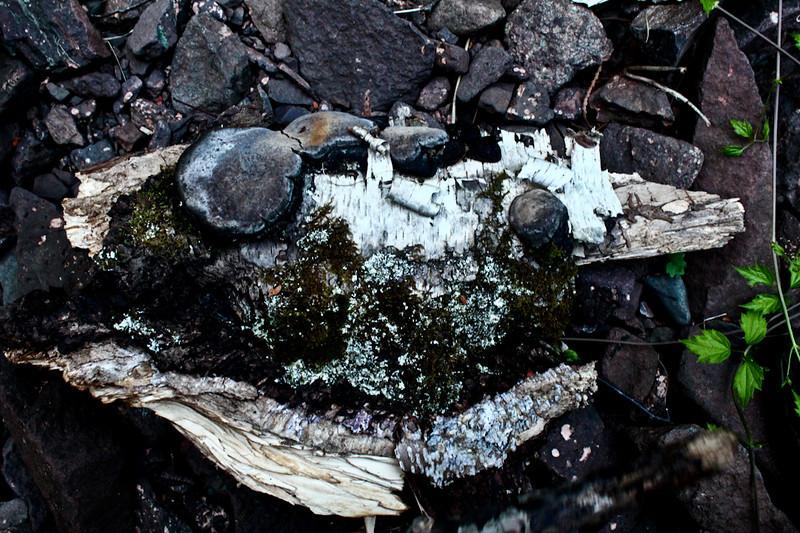 Nature Encampment-70