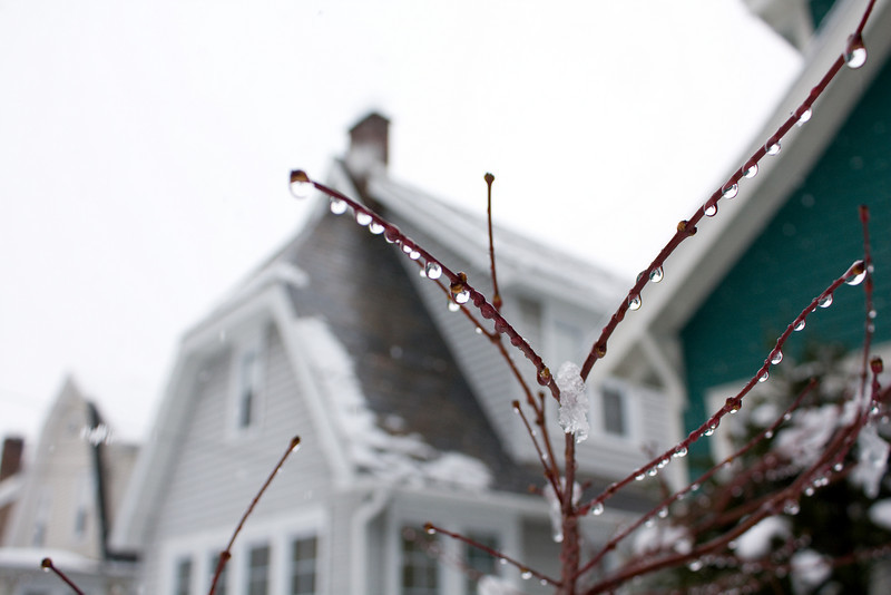 Ice on our Japanese Maple
