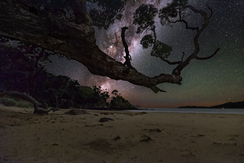 New Zealand Great Barrier Island Branch 1d copy.jpg