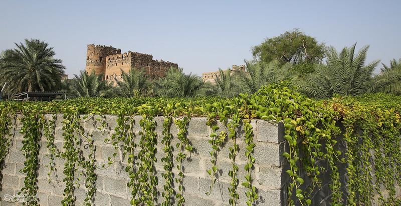 FE2A1284-Ibra-Alminzifah- Oman.jpg