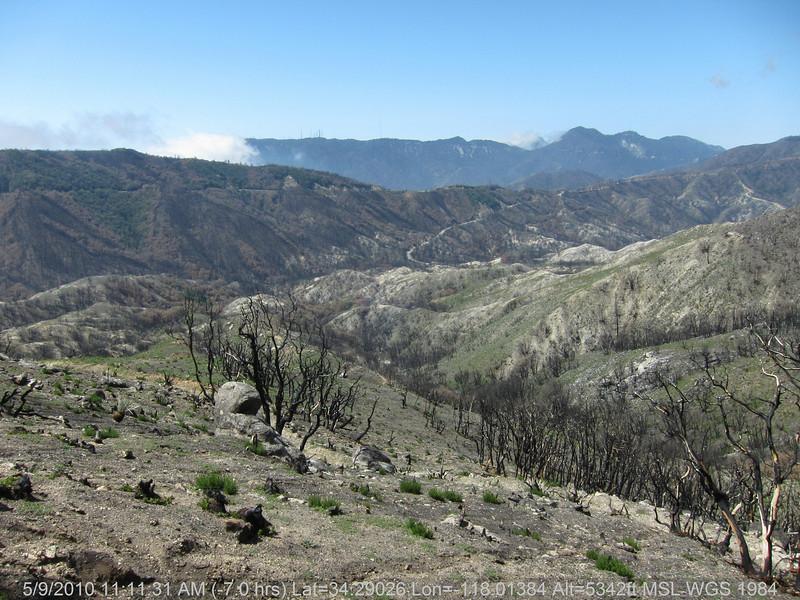 20100509039-Trail Recon, Silver Mocassin (Charlton to Shortcut).JPG