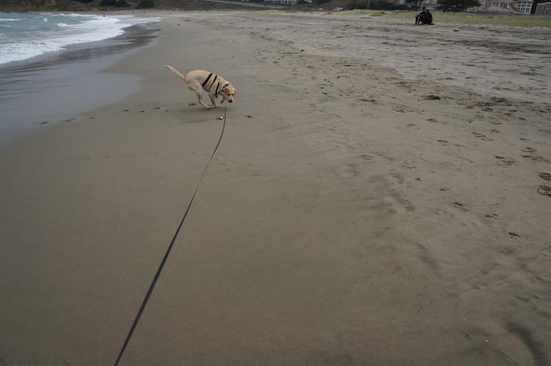 at the beach 2016 167.JPG