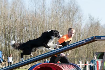 Onderlinge agilitywedstrijd ~ 3 april 2016 (foto's Joyce Wolters)