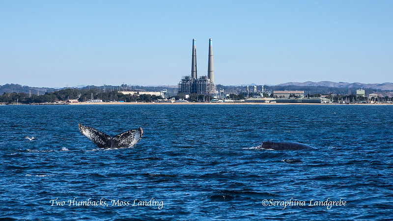 _DSC3738Two whales Electric plant.jpg