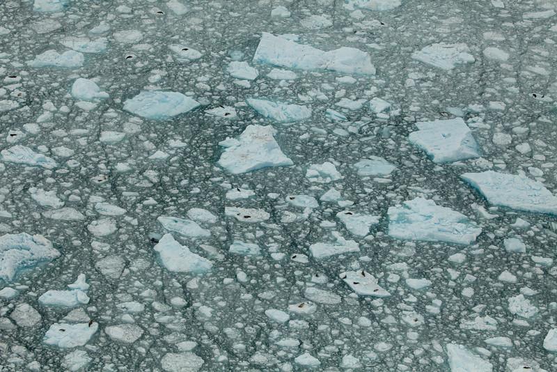 Alaska Icy Bay-3933.jpg