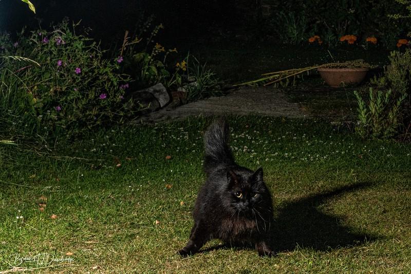 Garden Night Shoot-7349.jpg
