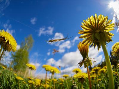 Wild flowers, bugs and other creatures - Luonnonkukkia, hyönteisiä ja muita pieniä otuksia
