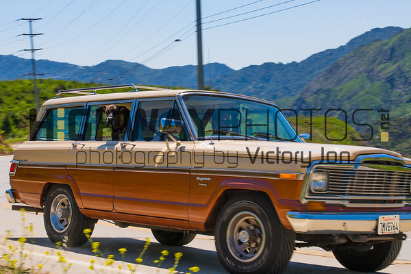 Sat 4/11/20 Cars & Velo