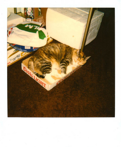 Polaroid_0082-XL.jpg