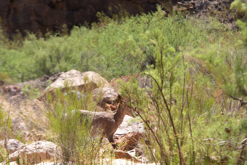 2014_Grand_Canyon_WHDW2_7D 77
