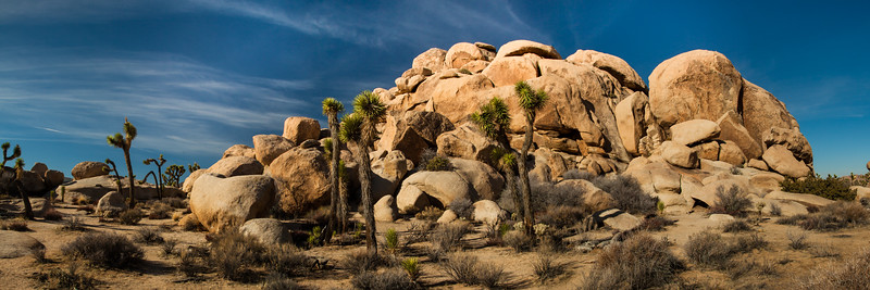 Yucca & boulders. Joshua Tree National Park. This is a 5 shot panorama