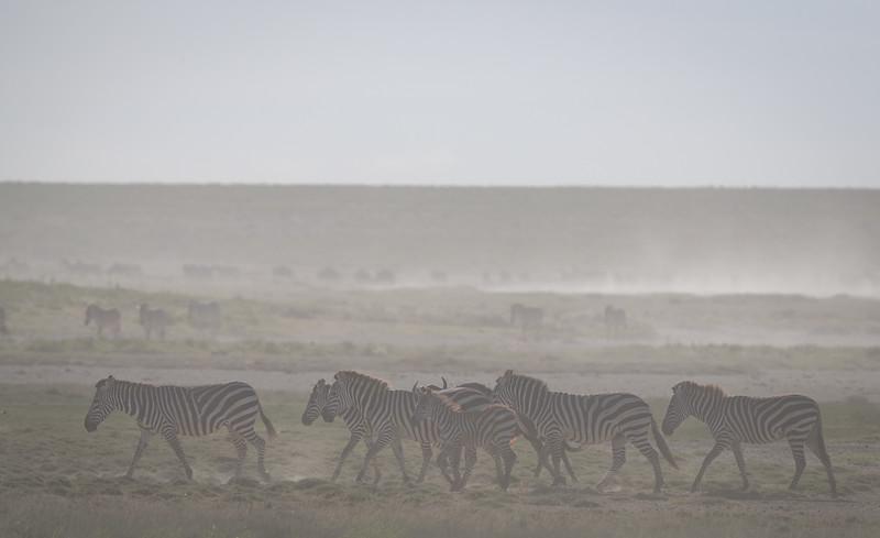 Tanzania_Feb_2018-380.jpg