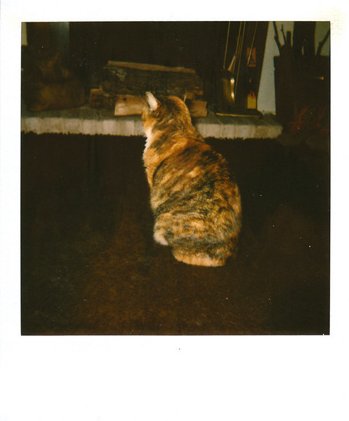 Polaroid_0073-XL.jpg