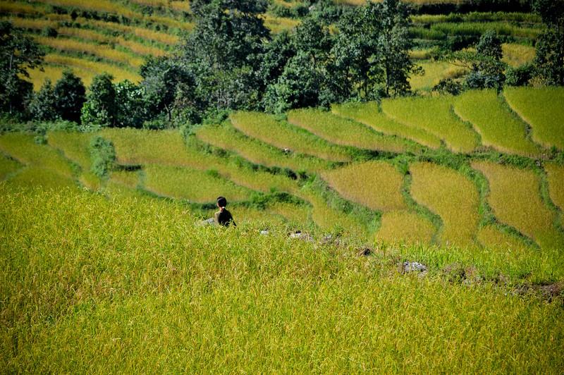 Pokhara-039.jpg