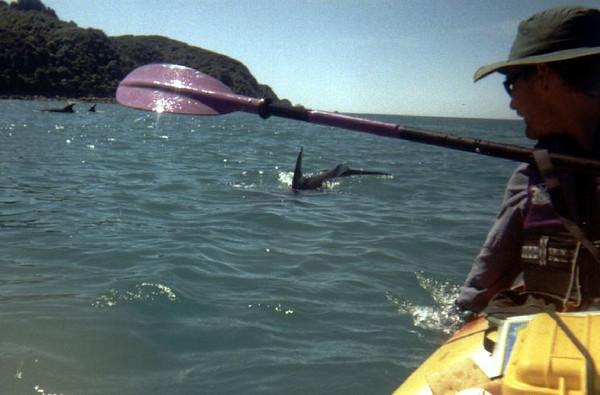 042.DolphinsGreg.jpg