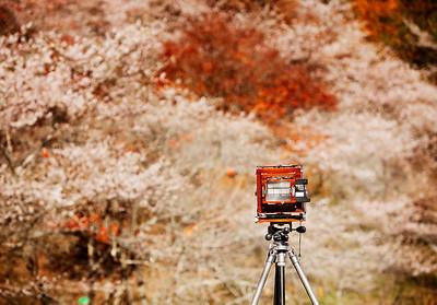 Japan (2009)