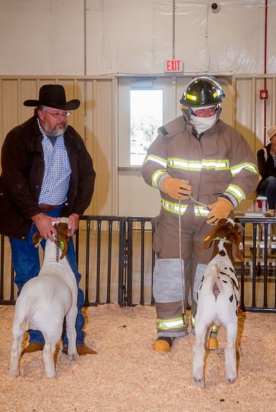 ww_goats_20191102_adults-8.jpg