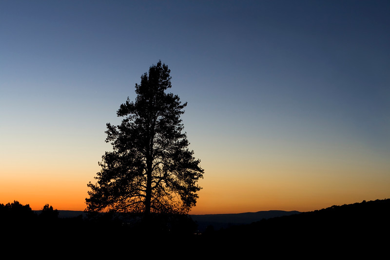 Beautiful sunset with a silhouette of a pine tree.