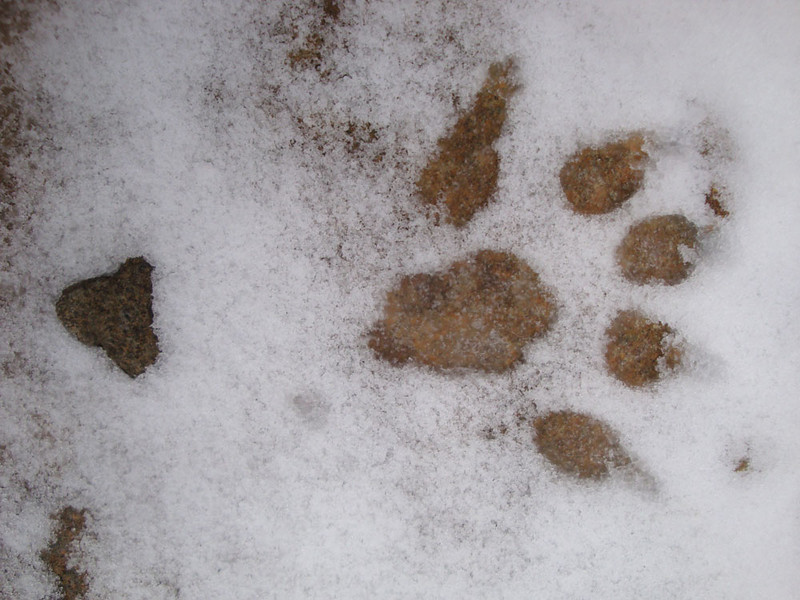 This mysterious print was discovered in the scree gully. Could it be the legendary thylacine, or Tasmanian Tiger? Hopefully, several of my companions still believe so...