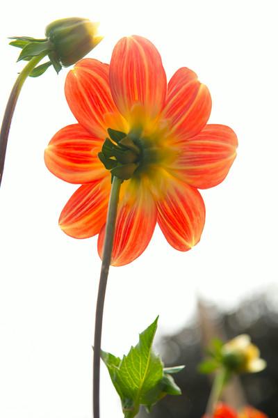 flower_7258.jpg