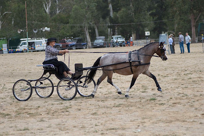 Berwick Show 2009 - Harness Saturday - Gallery 3