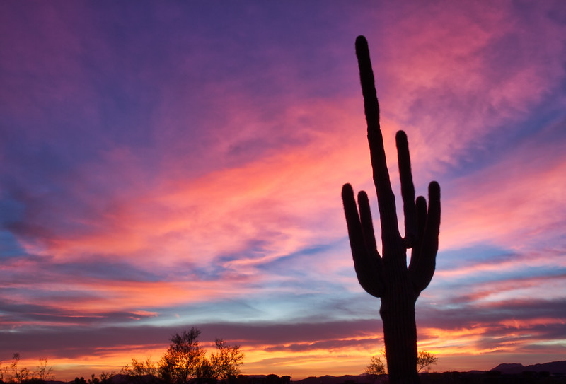 Saguaro at Sunset