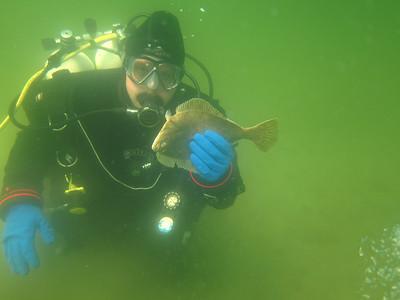 20110521 Dive, Flædbæk
