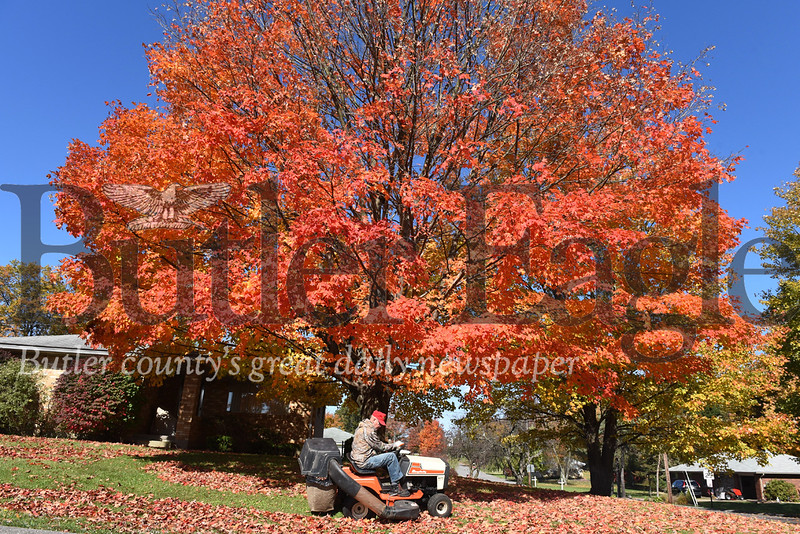 Harold Aughton/Butler Eagle: Tom Sweesy, 76 of Cabot, collects leaves Wednesday afternoon along Horne Ave. in Saxonburg. According to Sweesy, he bags about 22 bags of leaves from the maple tree in the front yard of his wife's homestead every year.