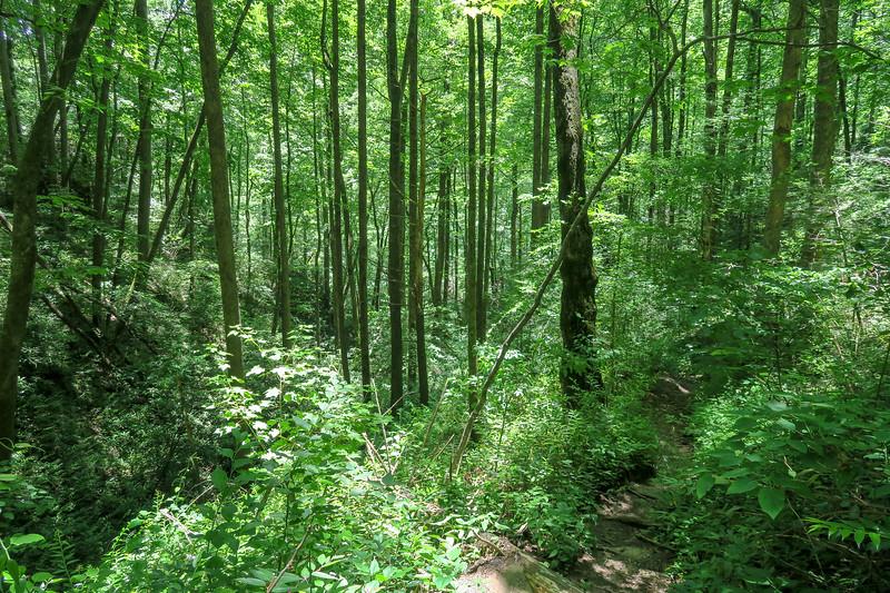 Boxcar Falls Path -- 2,500'