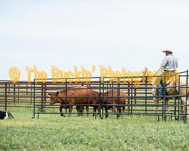 Horseback - 1st Run