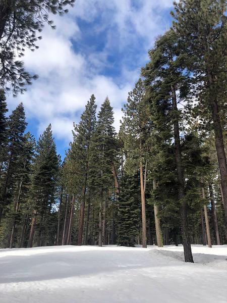 2019-03-21-0012-Trip to Tahoe with Dogs-Lake Tahoe.JPG