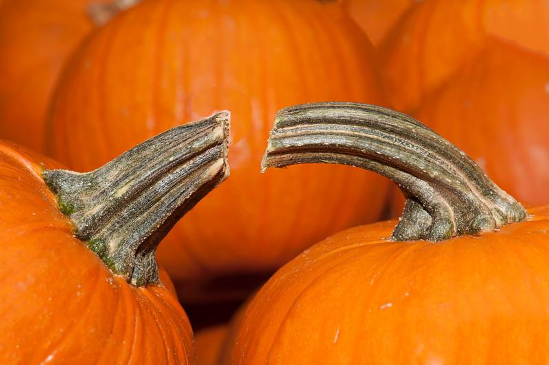 Pumpkins-19.jpg