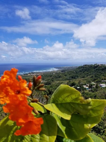 Barbados (43).jpg