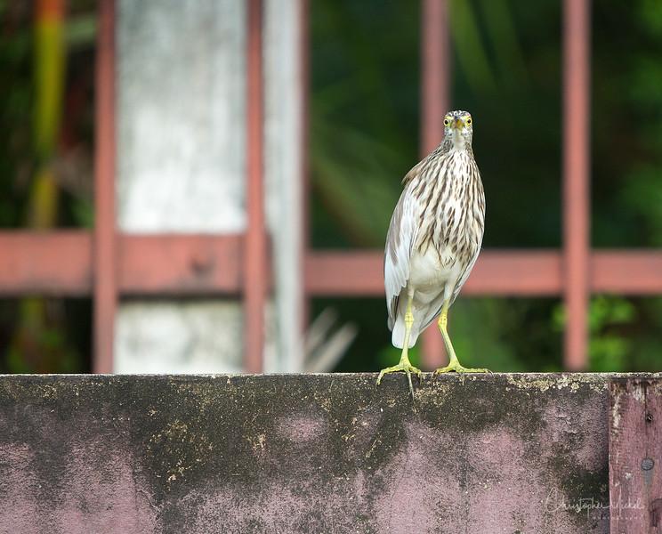 bangkok1_20120913_3700.jpg