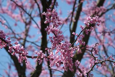 Random Spring & Summer2010 shots
