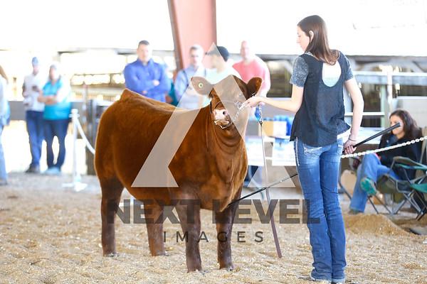 2016 Heifer Ring Shots