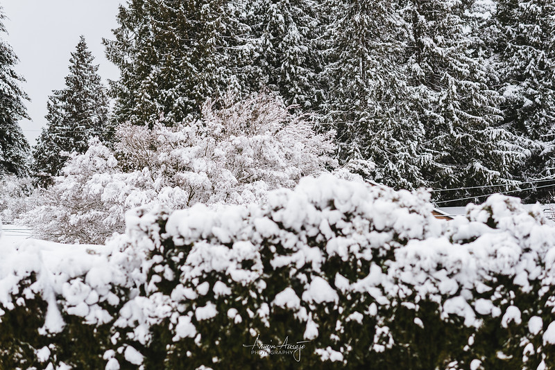 SnowWedgwoodFeb2019-9.jpg