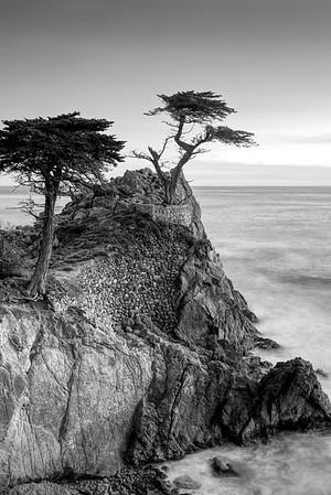 Lone Cyprus, Monterey