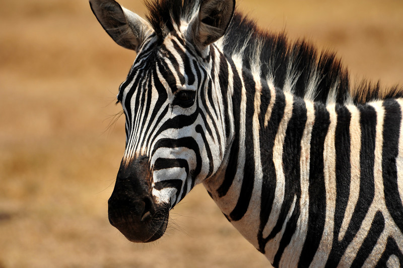 Africa 2010-030.JPG