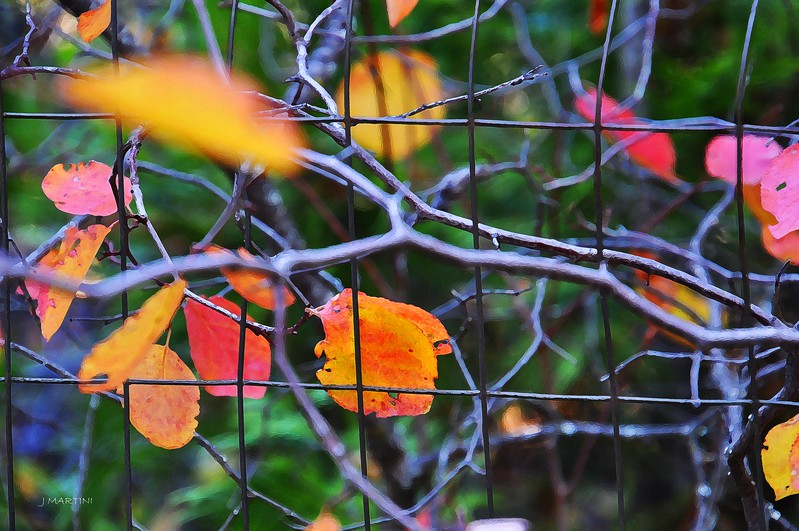 WIRE FENCE 10-2-2017.psd