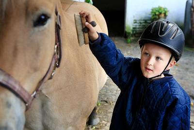 hest fotos