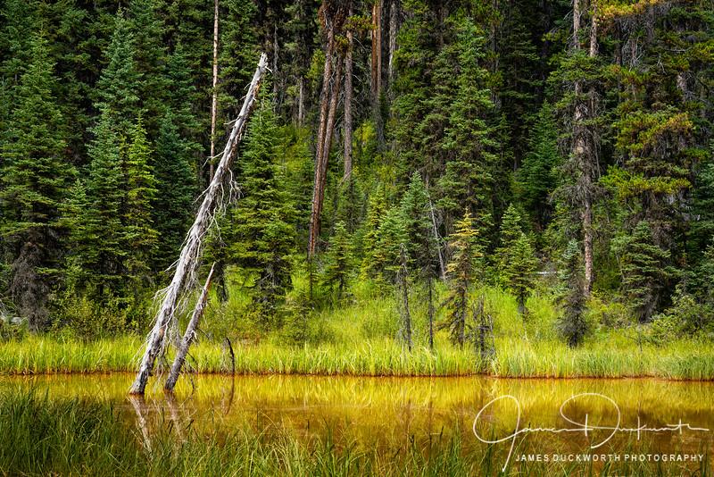 Paint Pots, Kootenay National Park, British Columbia