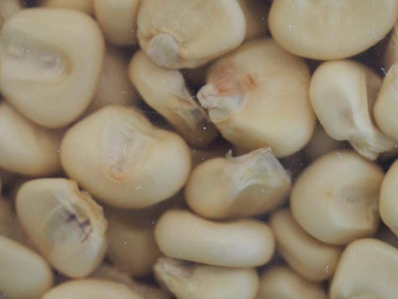 Corn-SenecaWhite-Mandamin275.JPG