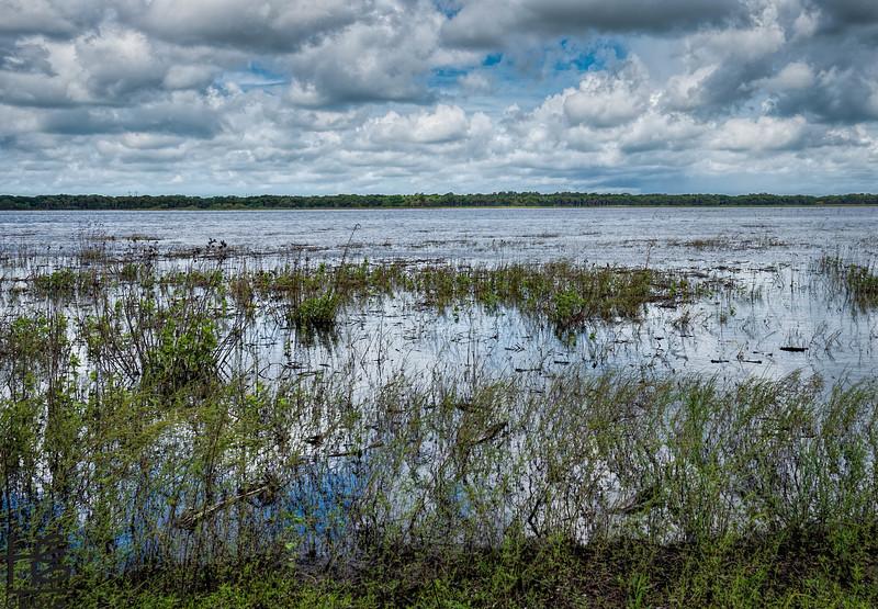Flooded wetlands