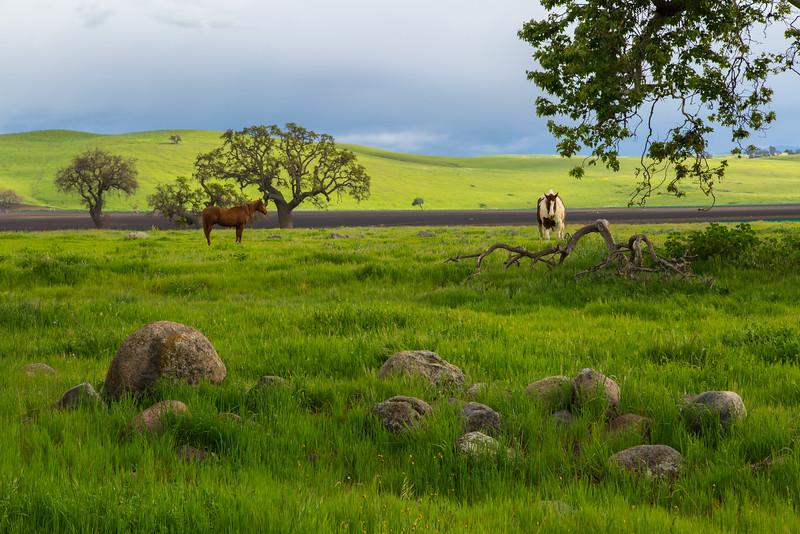 Typical farmland scene.