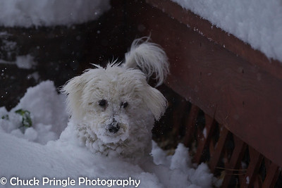 Puppies' First Snow