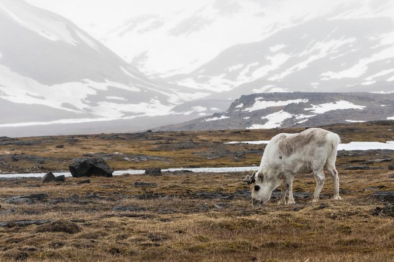 Inspirato-Arctic_Expedition18-04-Russebukta-1819.jpg