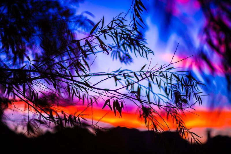 2015-12-10-Sunset Art-2.jpg
