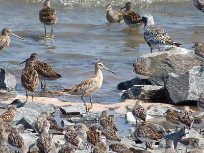 Birds July September 2013