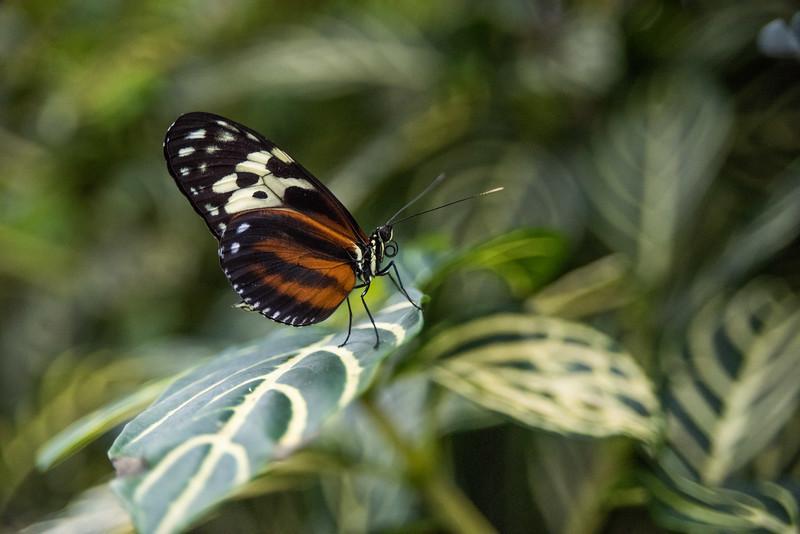 butterfly-283.jpg